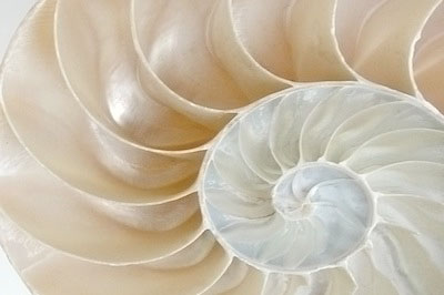white nautilus shell, somatic and past life therapy