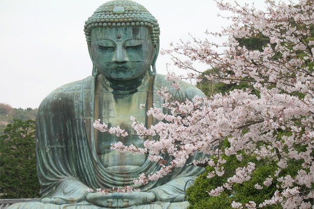 buddha with cherry blossom, clarity and compassionate wisdom for the soul