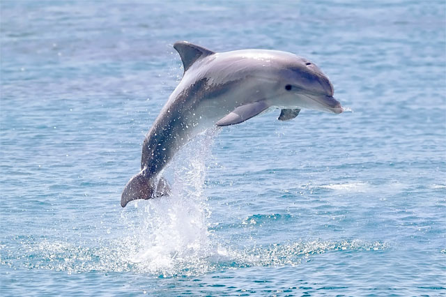 jumping dolphin, benefits of working with Elizabeth