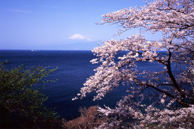 mt fuji and cherry blossom, working with symptoms