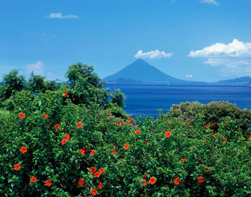 mt fuji & hibiscus, psychic readings what to expect